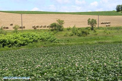 じゃがいもの畑と…〜7月の上富良野2369.jpg