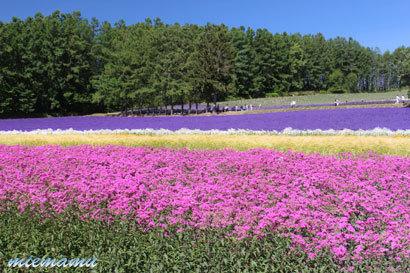 ファーム富田にて〜花と山並み2447.jpg