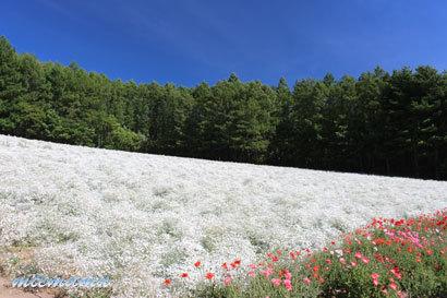 ファーム富田にて〜花と山並み2501.jpg