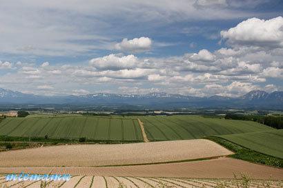 ルベシベからの丘と山並み〜6月の美瑛1182.jpg