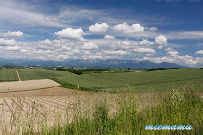 ルベシベからの丘と山並み〜6月の美瑛1184.jpg