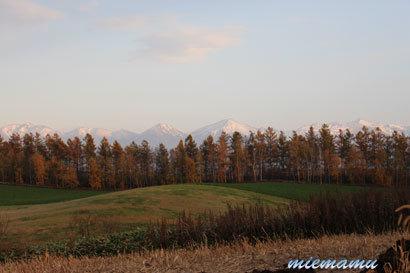 三愛の丘と紅葉〜10月の美瑛0102.jpg