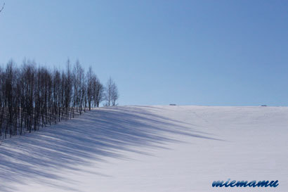 雪原と木の陰〜1月の美瑛0249.jpg