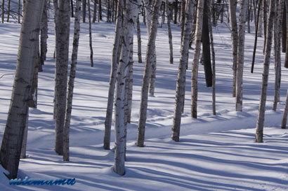 雪原と木の陰〜1月の美瑛0293.jpg