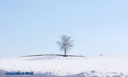 雪解けの模様〜3月の美瑛1254.jpg