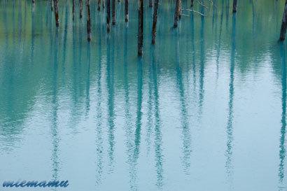 青い池〜5月の美瑛0998.jpg